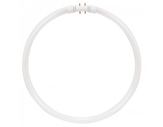 Satco S8157 - FC22T5/841 - 22 Watt - Circline Fluorescent - T5 - 4-Pin (2GX13) - 4,100 Kelvin (Cool White)